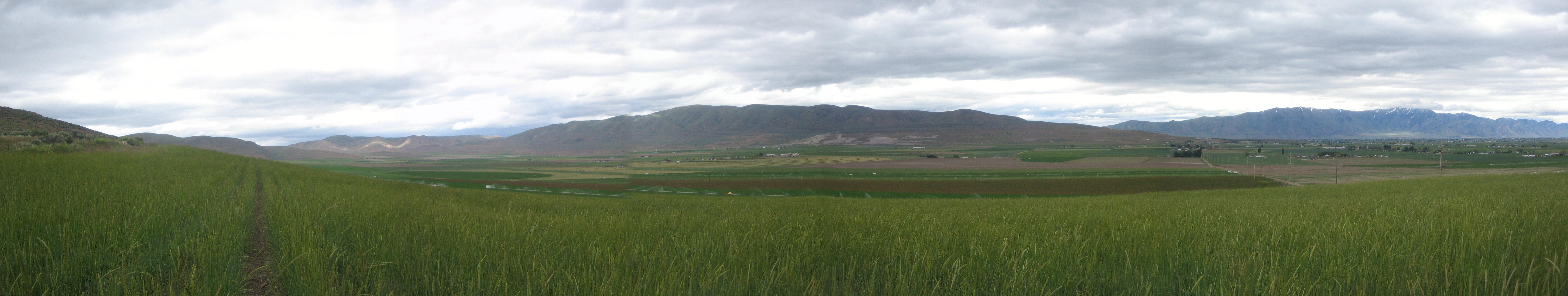 Seed Field Panorama